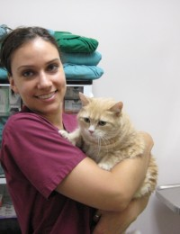 registered veterinary technician holding cat
